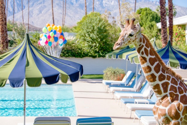 giraffe at the pool